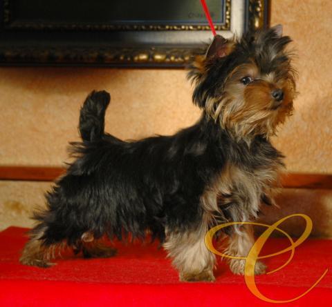 Cachorro de 3 meses.