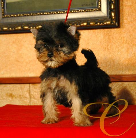 Precioso cachorro de 2 meses. Muchas posibilidades.